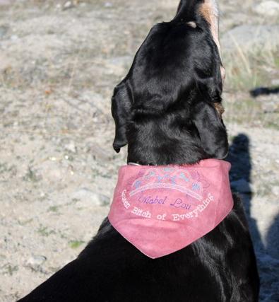 Mable Lou in her custom bandana