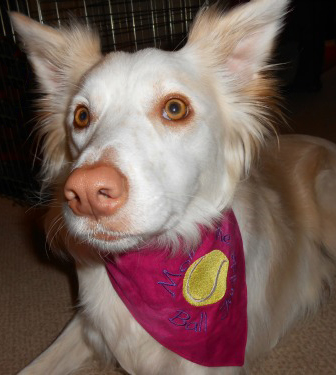 Pretty in Pink Mollie in her bandana