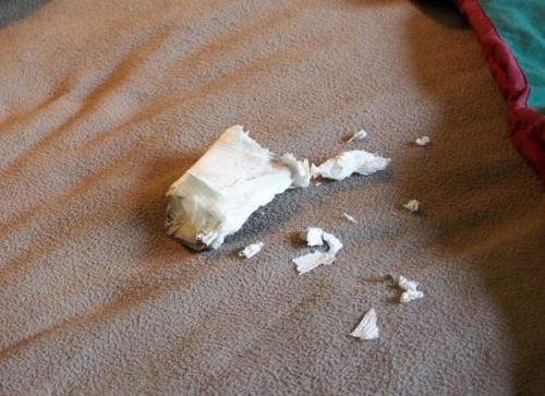 Destroyed Toilet Paper