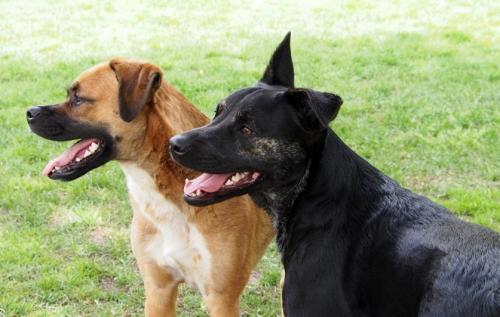 Walter & Millie