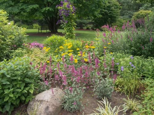 perennial garden 4