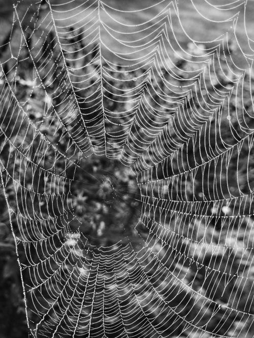 Garden Spider Web - BW - 1