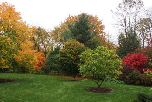 back yard foliage - east view