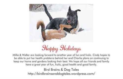 2014 Christmas Card - back
