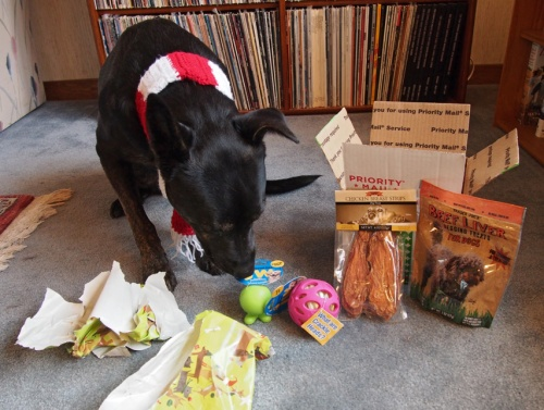 Millie - checking out pressies from Duncan