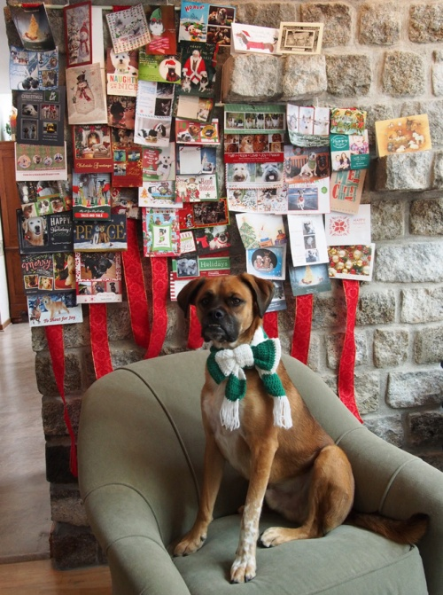 Walter models with the Christmas Cards