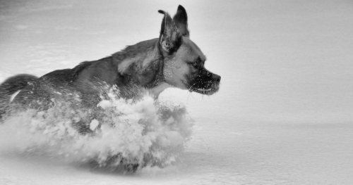 Dashing through the snow Hey I have upright ears!