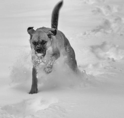 Retrieving a Thrown Snowball
