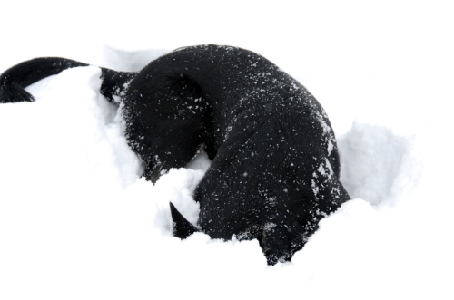 First step is to stick your head under the snow.