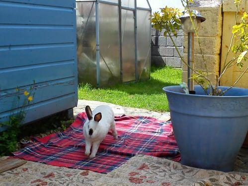 Speedy the House Bunny really has the moves!