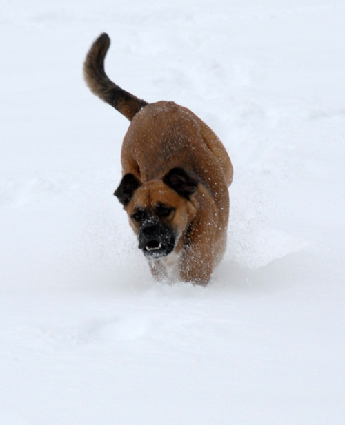 Walter - zooming through the snow - lr