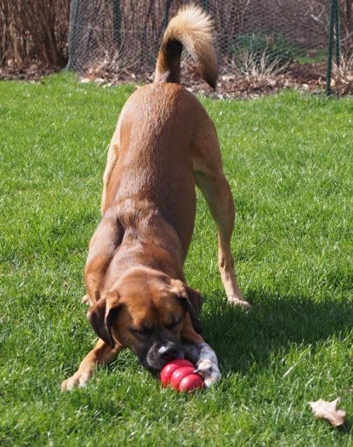 Sometimes you have to get the right angle for your tongue to reach into the Kong