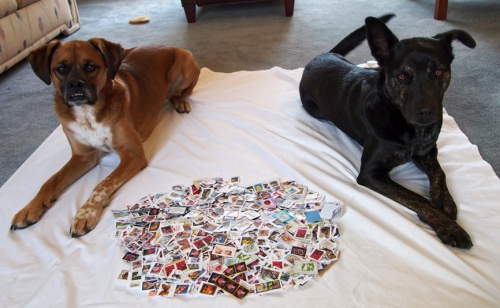 Walter & Millie with stamps from the 2014 holiday season
