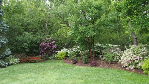 Azalea, Rhododendren, Viburnum, Roses and Weigela in bloom.
