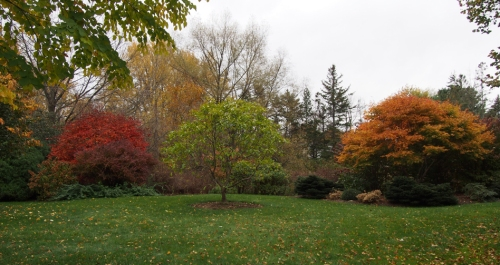 Japanese maple trees in fall color on far left and right