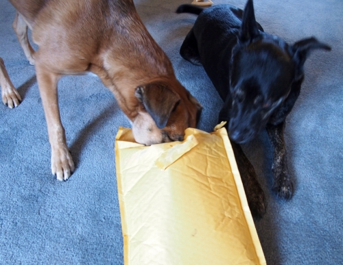 Millie you won't believe what is in here. It doesn't smell like treatss so I'm not really interested.