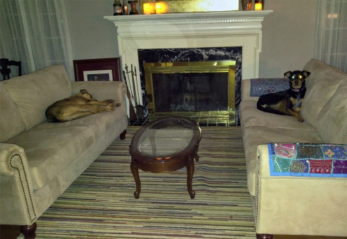 Blitz (left) and Rolo are not allowed on the furniture...unless nobody is looking.
