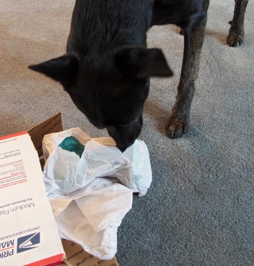 Millie - unwapping stuffie bone