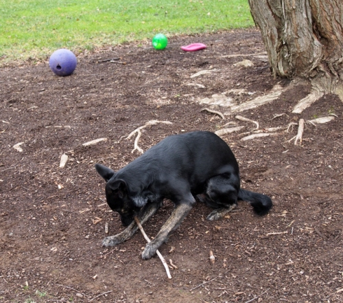 There's nothing like a good old fashioned stick