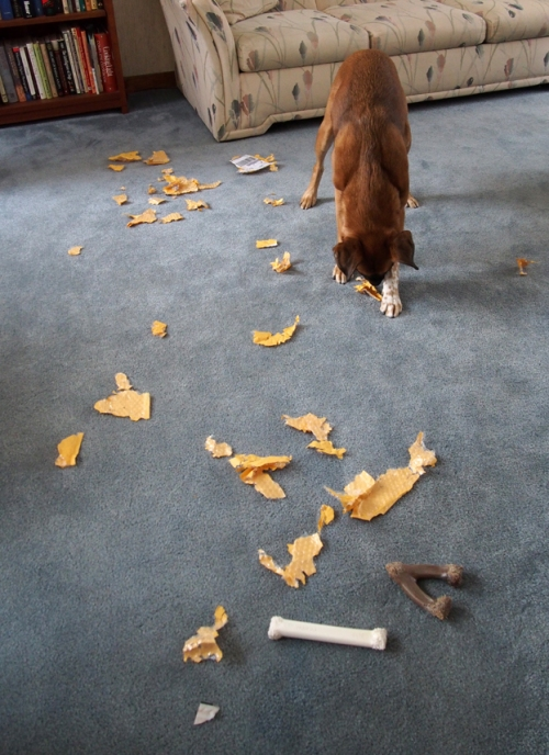 I had to finish destroying the envelope to make mom clean up a big mess. BOL!