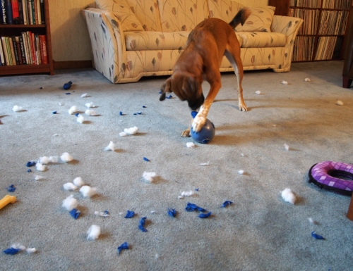 Walter - slobber ball action - debris field