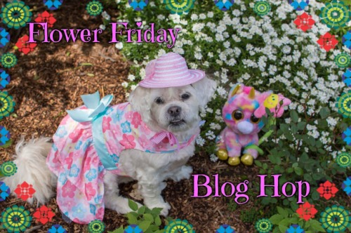 FlowerFridayBlogHop 2016