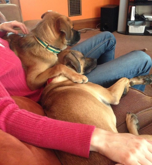 Snuggling with foster mom Lindsay and foster bro Rocco (I'm the one with the green and yellow collar)