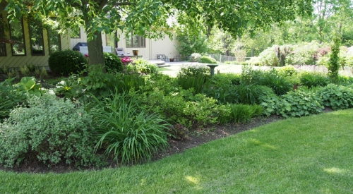 Perennial garden - from south east corner