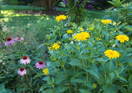 sunflowers - cone flowers - clemetis
