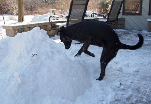 I love digging in the snow pile