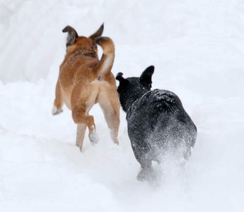 Catch me if you can Millie! I'm right on your tail Walter!