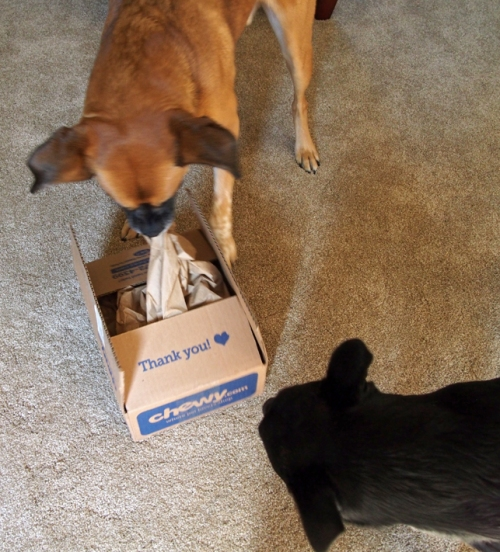 OMD! Another Chewy.com box!