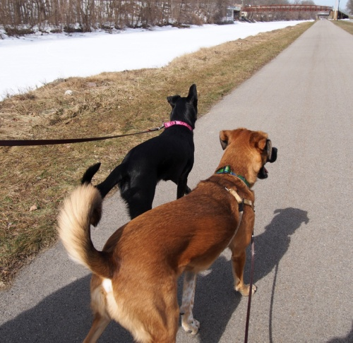 We love walking along the Erie Canal