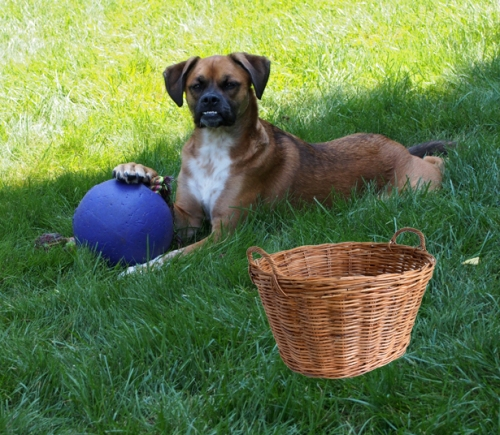 Walter - jolly ball - basket