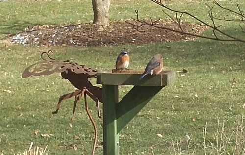 They're using the feeder!