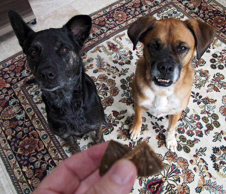 Natural Balance Dog Food Rolls How Much To Use
