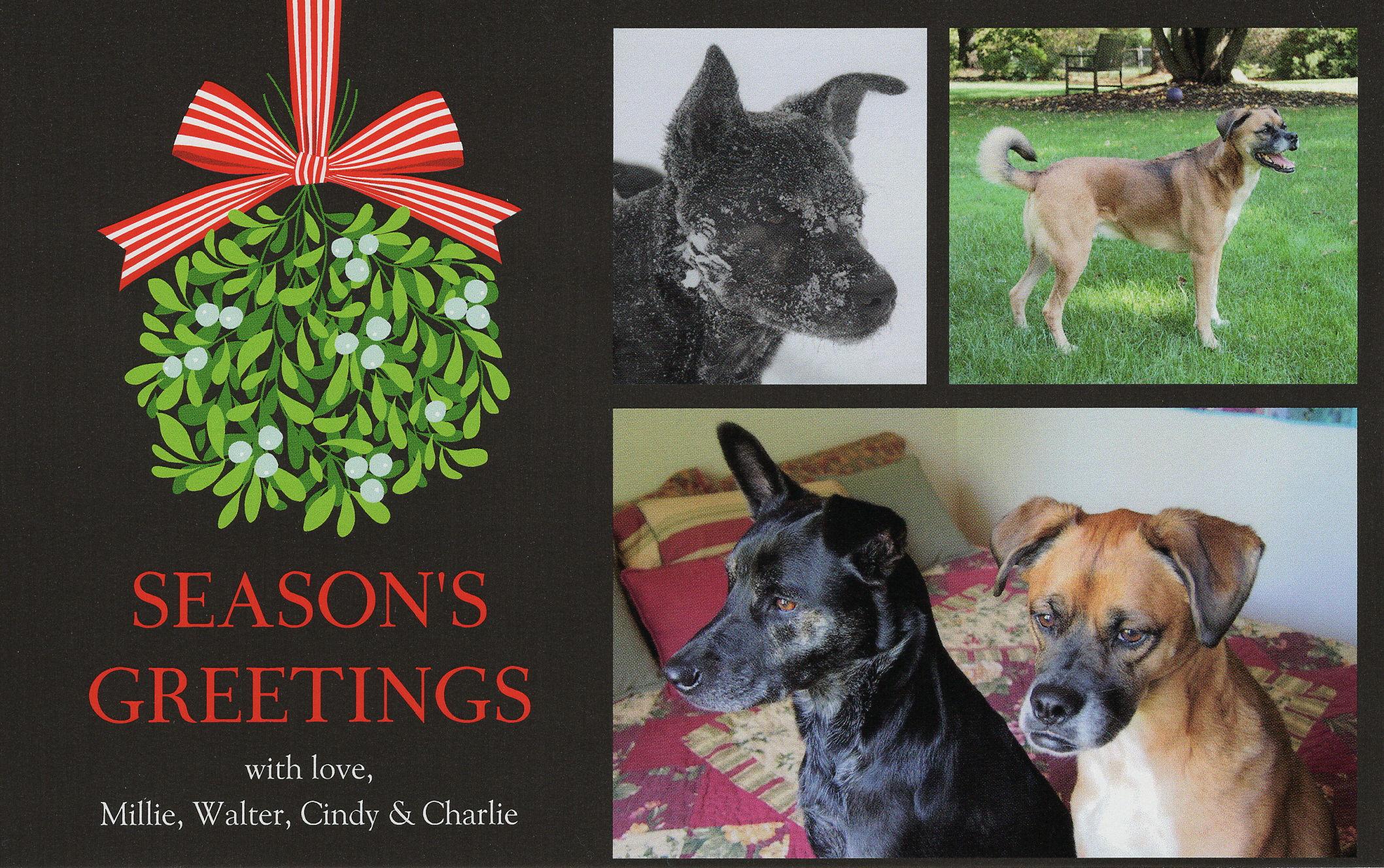 Christmas Card Bird Brains Dog Tales