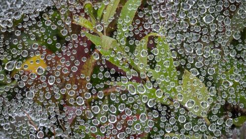spider web after rain - lr