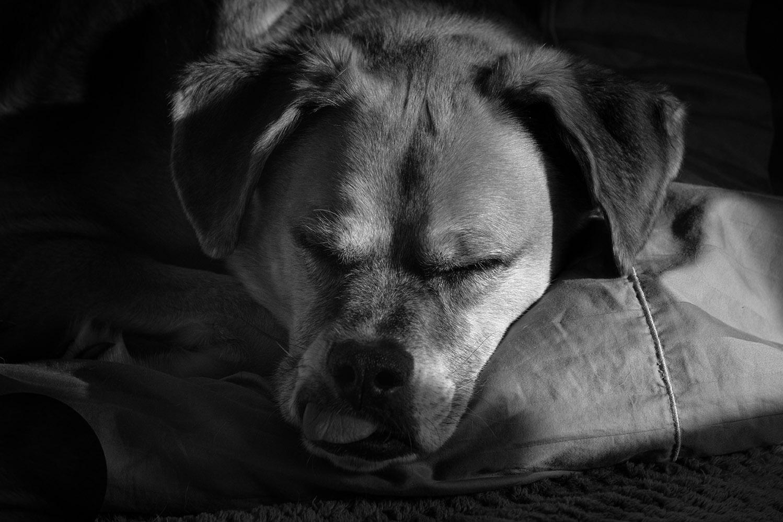 Walter sleeping 6-1-21 - lr