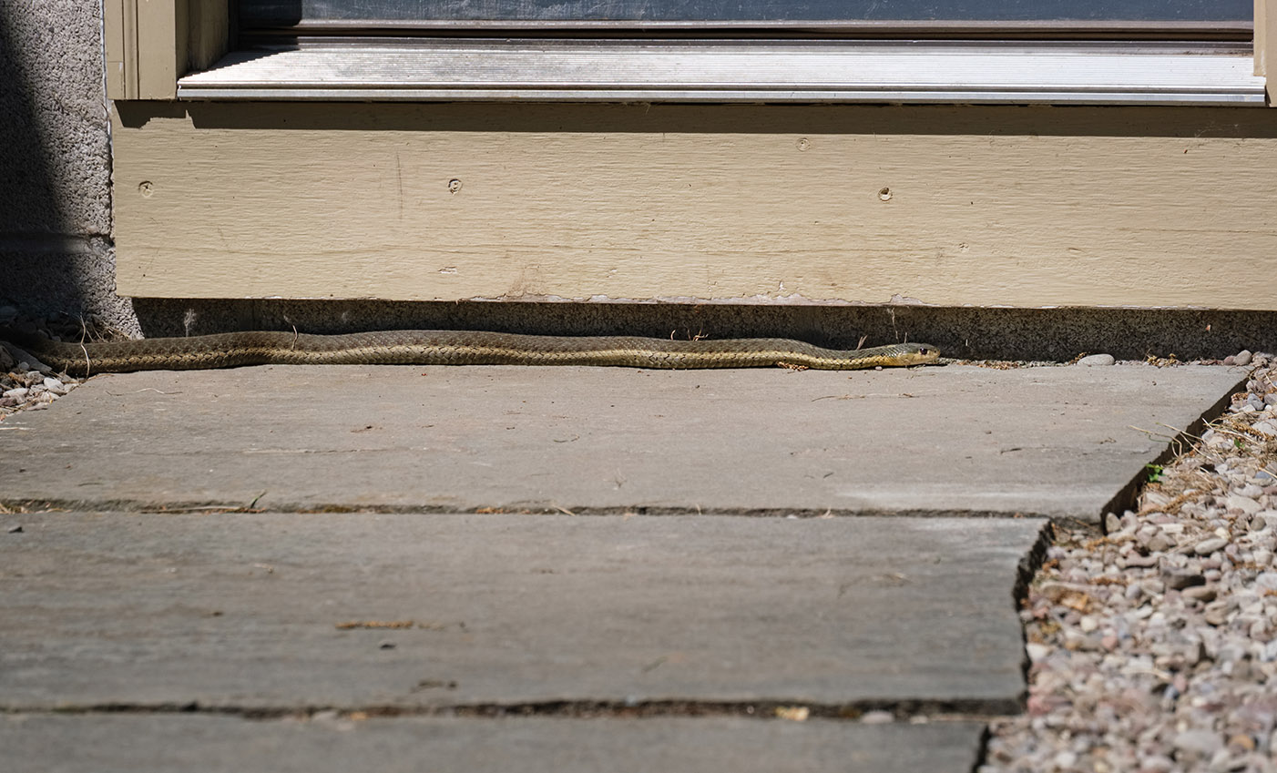 6752 - Snake moving under door - lr