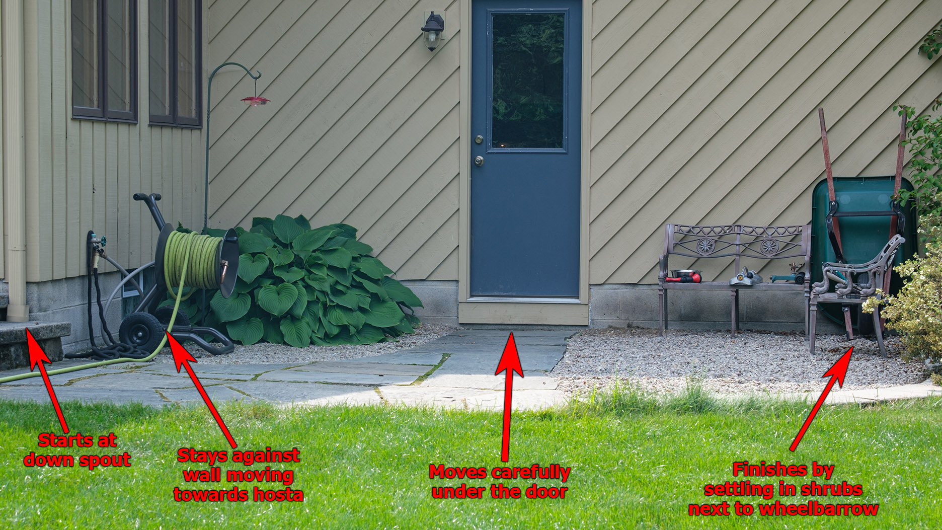 7271 - Patio where snake moves from drain - annotated