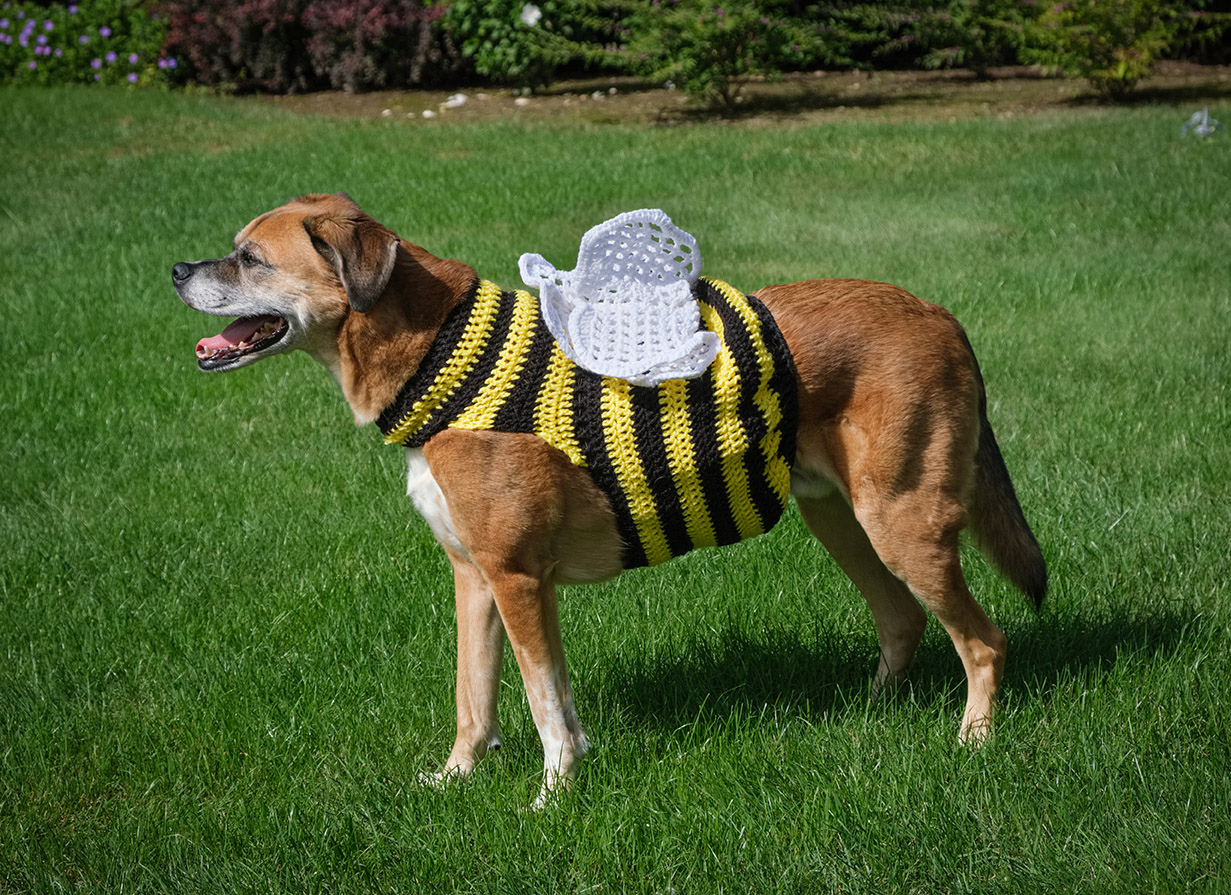 7357 - Walter - as a Bee - lr
