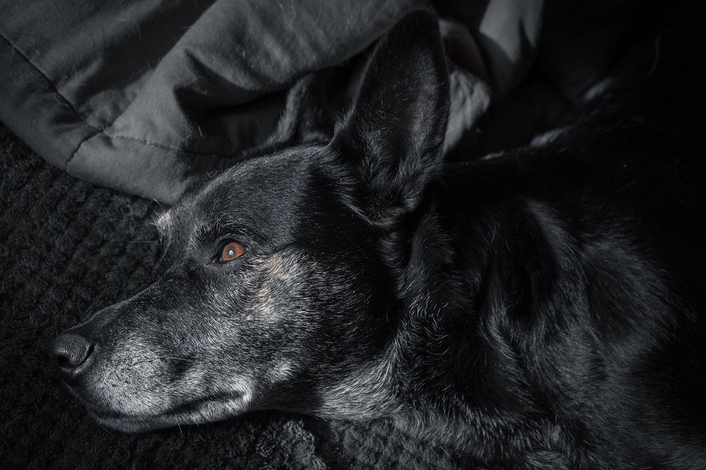 Millie relaxing 9-1-21 - lr